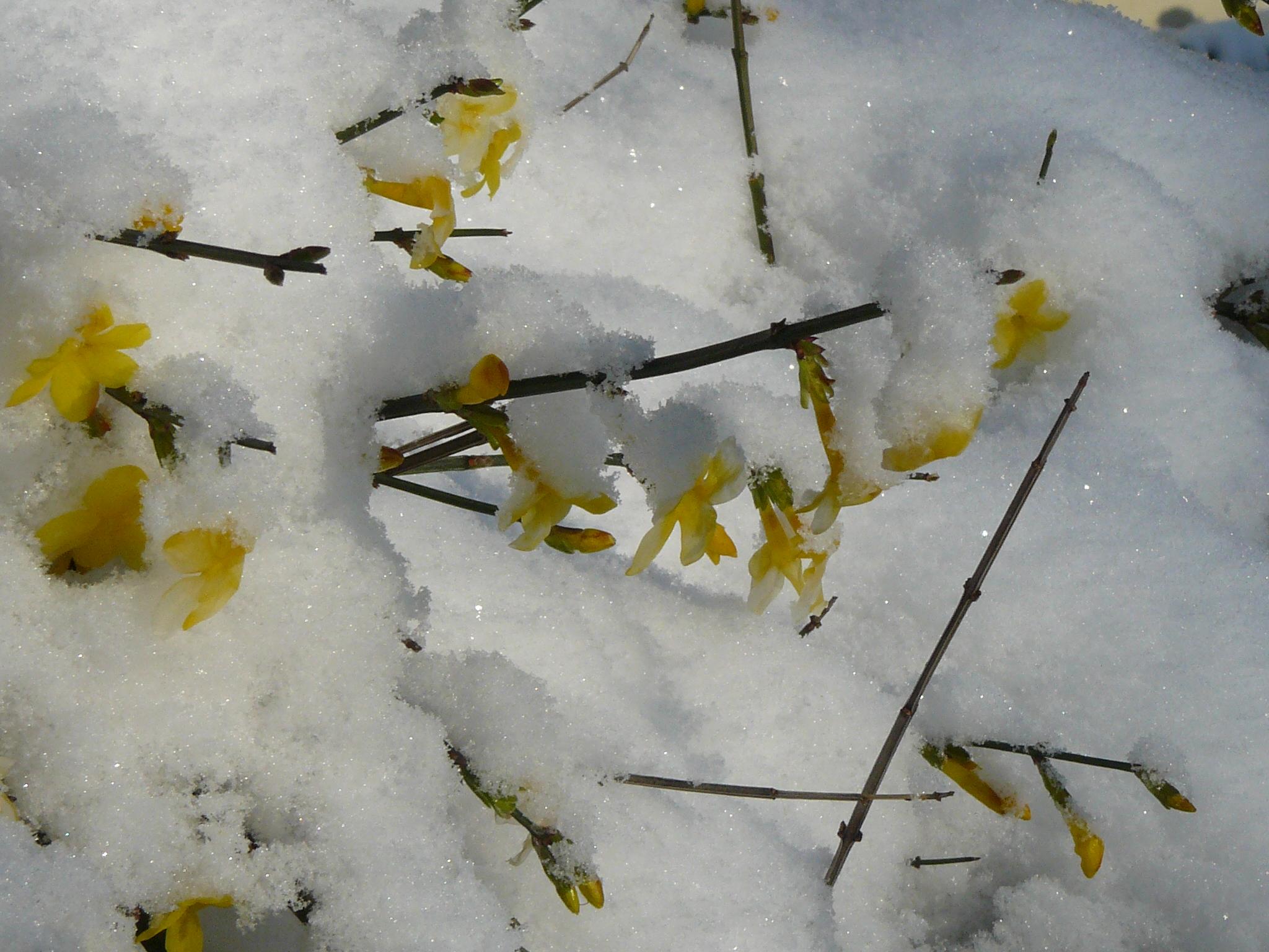 piestany-zima-2010-48